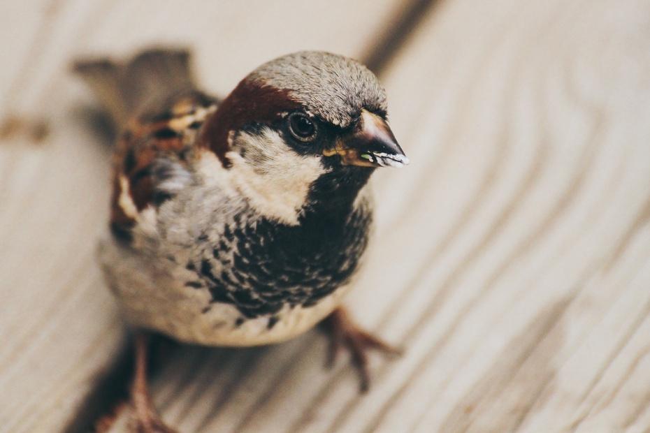 Nicht nachweislich Vogelgrippenkranker Vogel, Symbolbild von Frida Bredensen