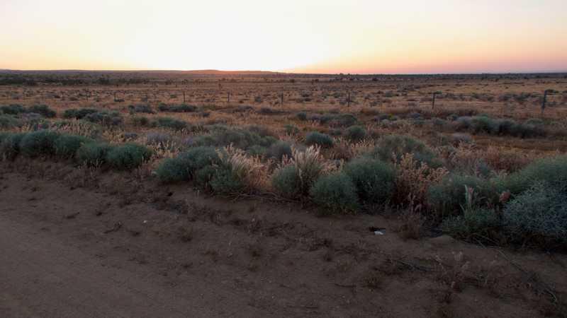 Mojave Desert at dawn
