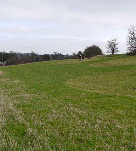Rein Park
