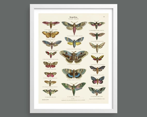 Butterfly and moth vintage chart print