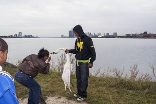 belle isle dead swan detroit