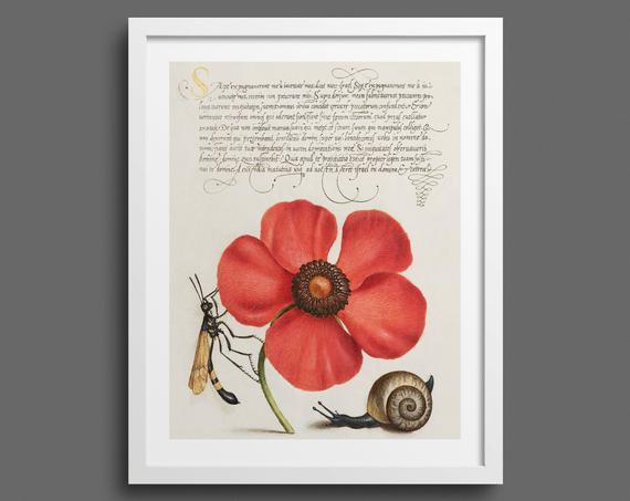Poppy, Snail and Crane Fly