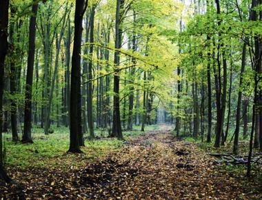 Despre Plantele de pădure pe înțelesul copiilor