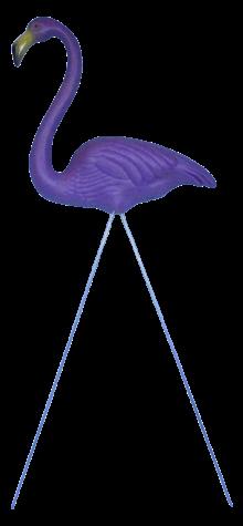 Purplemingo photo