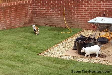 Even indoor cats love to sniff around outside if possible, so giving them 5-10 minutes in the backyard (or a neighbor's backyard) can be valuable.