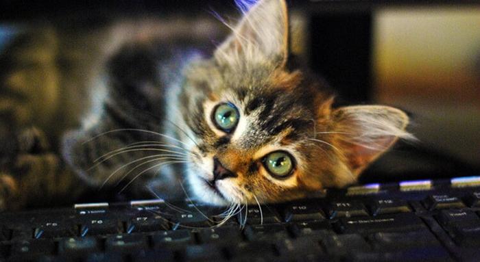 Cat laying on keyboard