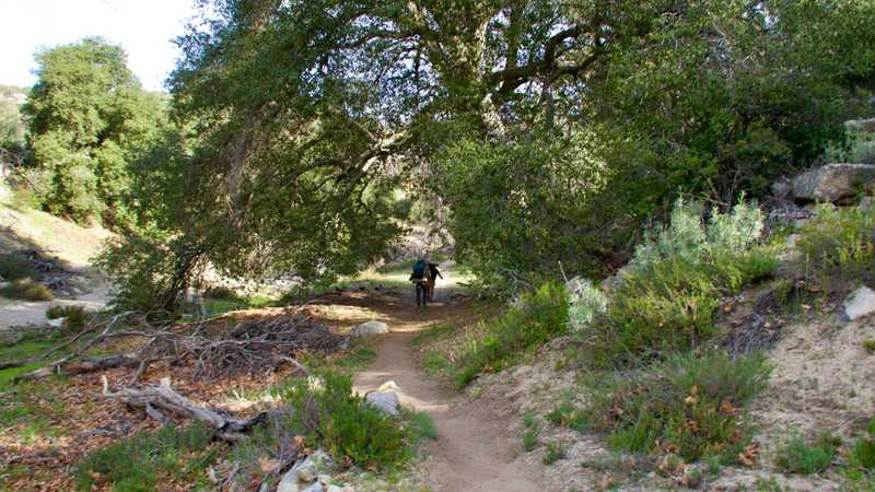 Walk through trees