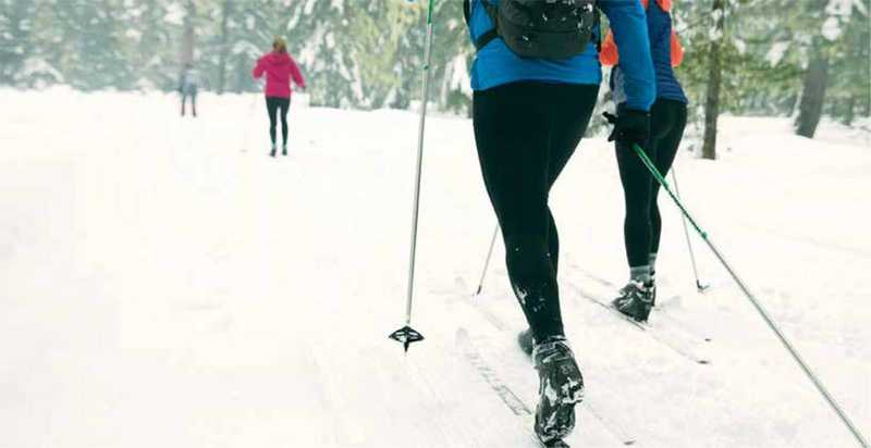 Skiiers cross country skiing in forest