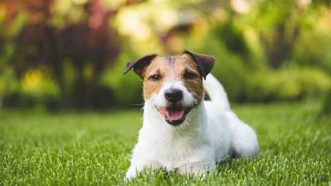 Five Ways to Keep your Landscape Looking Great When You Have Pet-Owning Tenants