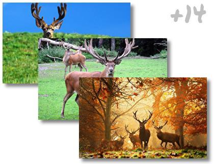 Deer theme pack