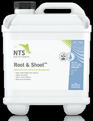 root & shoot