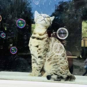 Who knew kittens loved bubbles as much as my kids?