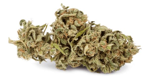Popular marijuana strain: Jack Herer