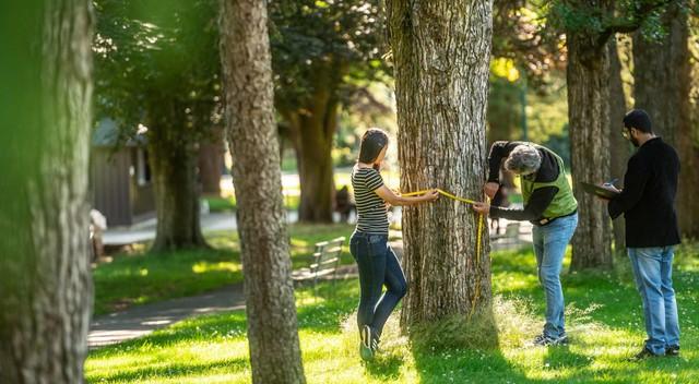 Three people measure a tree in their neighbourhood
