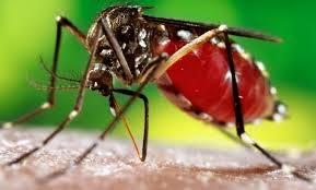 अहमदाबाद के सबसे बड़े अस्पताल के 25 डॉक्टर भी आए डेंगू की चपेट