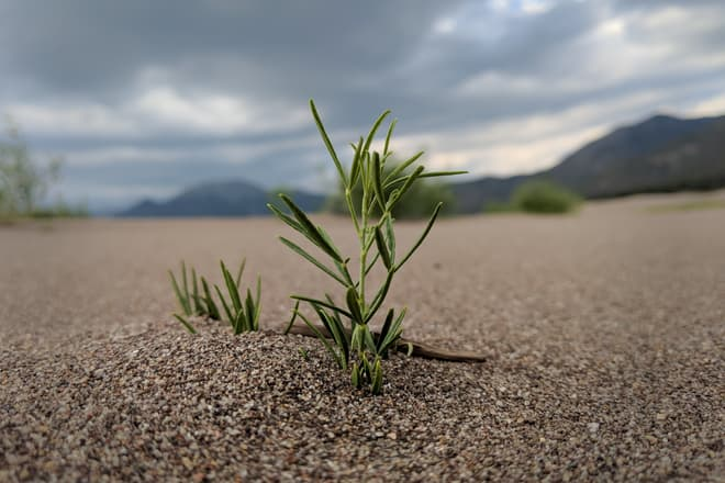 A small plant emerges from the sand.
