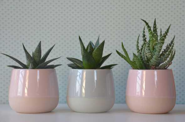 vetplantjes in potten