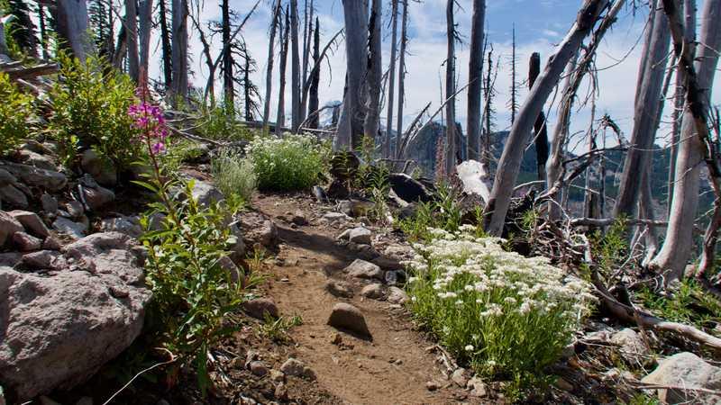 Flowers in a burn area