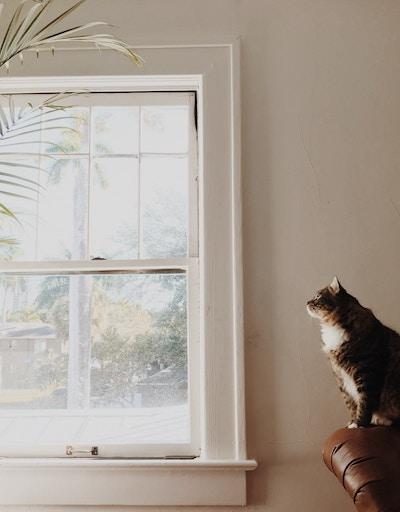 image of cat sitting near window