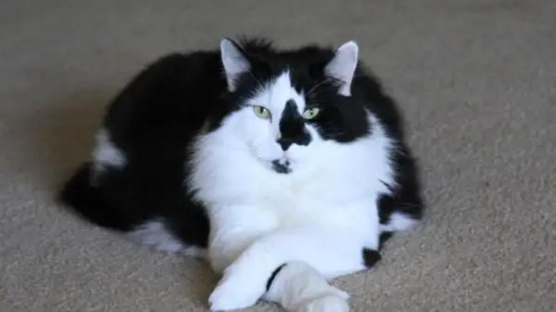 201602 cat