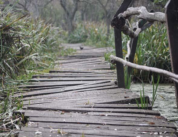 Uneven wooden walkway over water