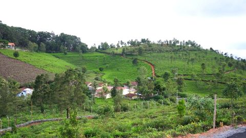 Birdseye view of High field