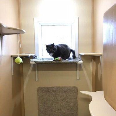 fun-cat-hotel