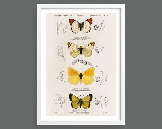 Vintage butterflies illustration