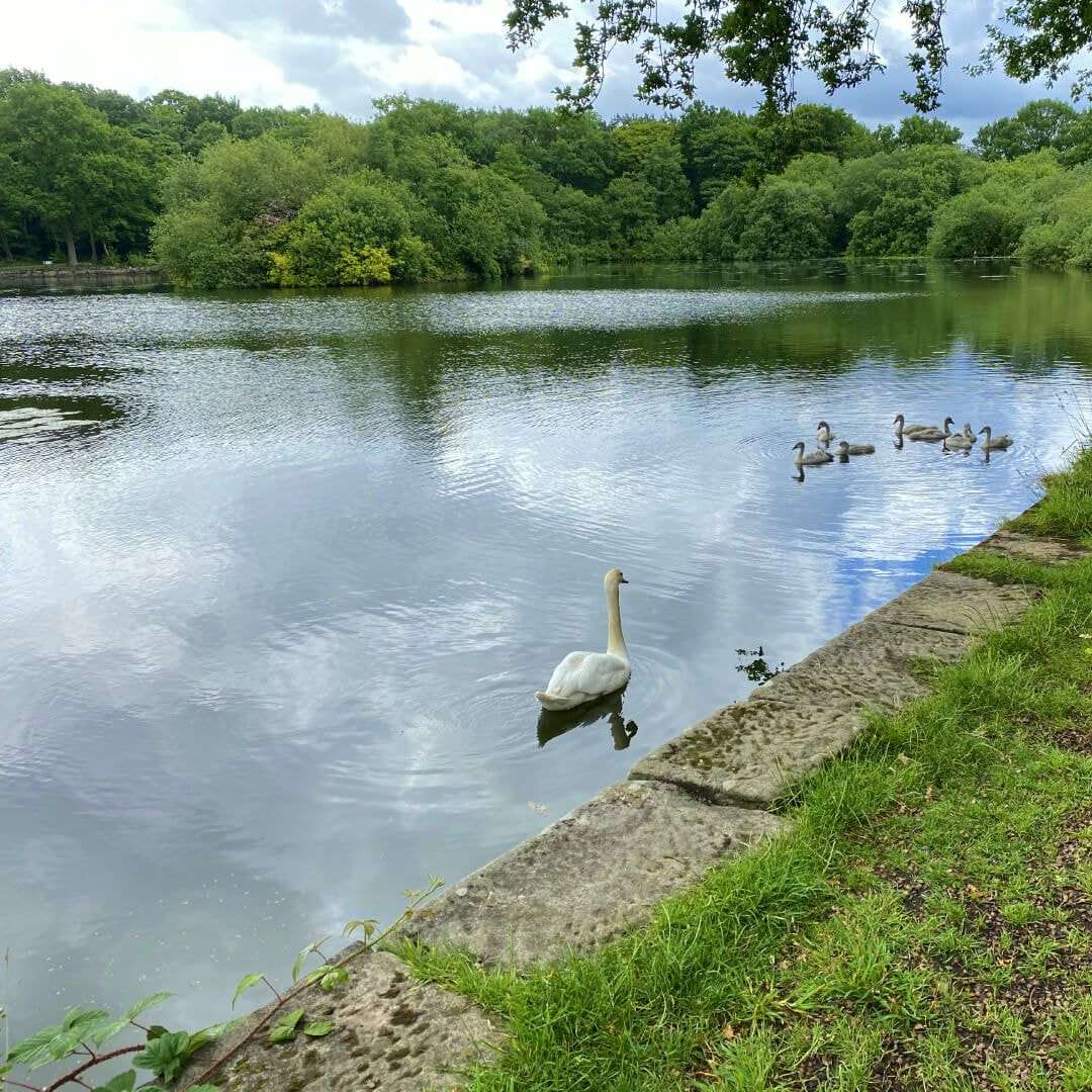 Breary Marsh Lake Pauls Pond