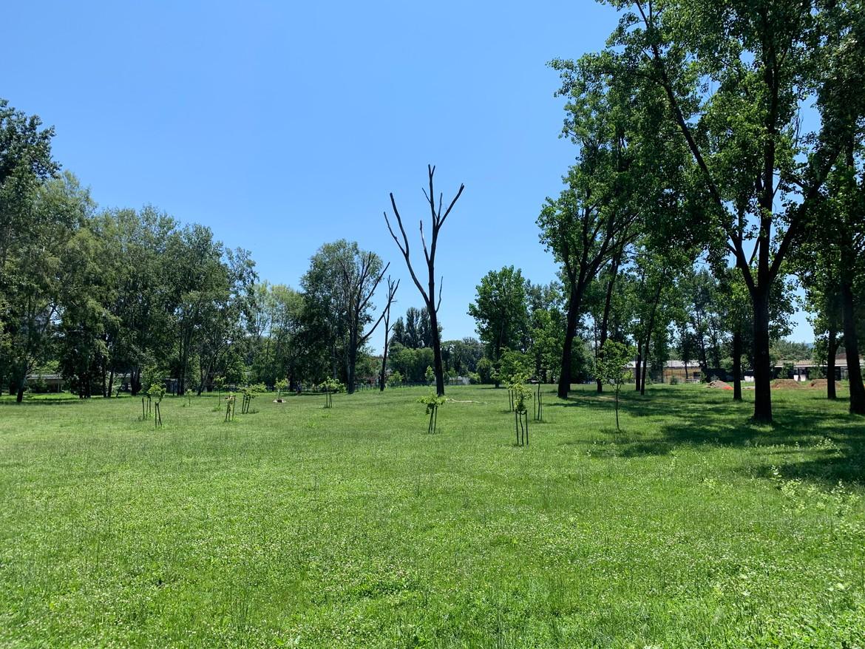 novi trees