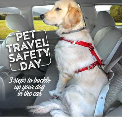 3 Steps to Buckle Up Your Dog in the Car