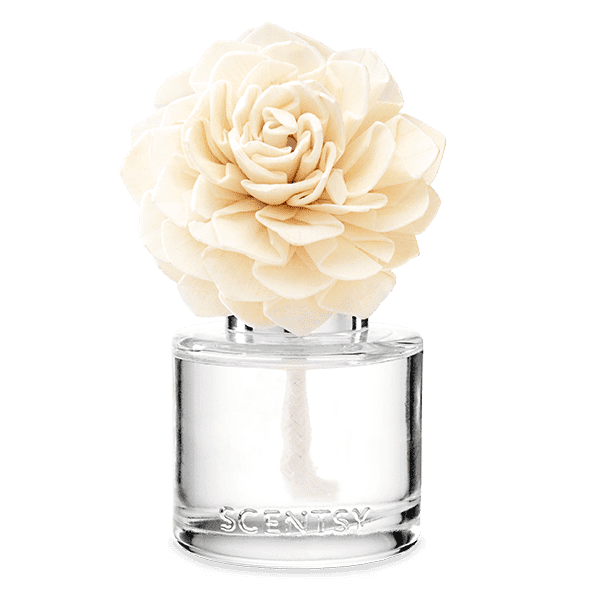 Very Snowy Spruce - Dahlia Darling Fragrance Flower