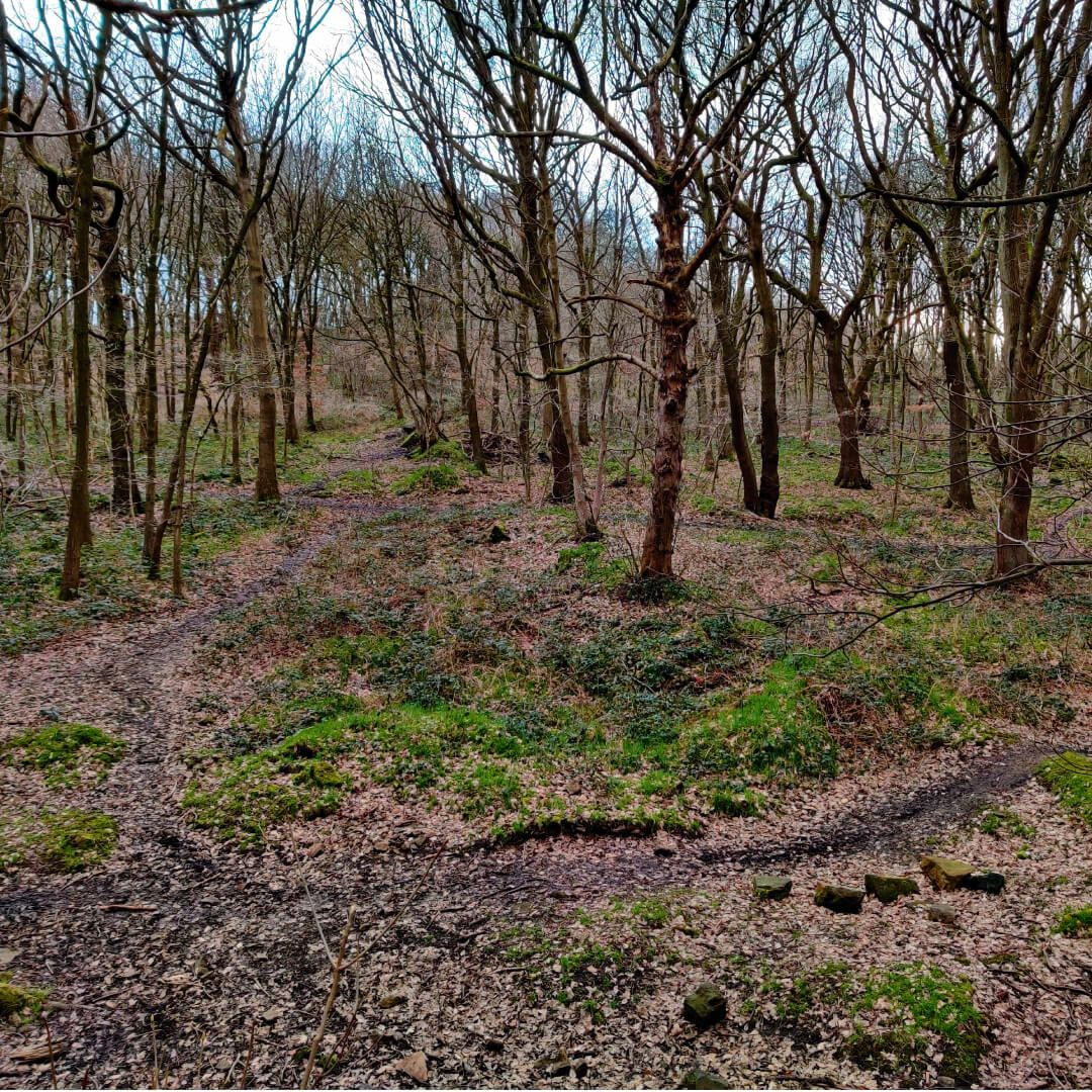 Bramley Fall Woods off the beaten path