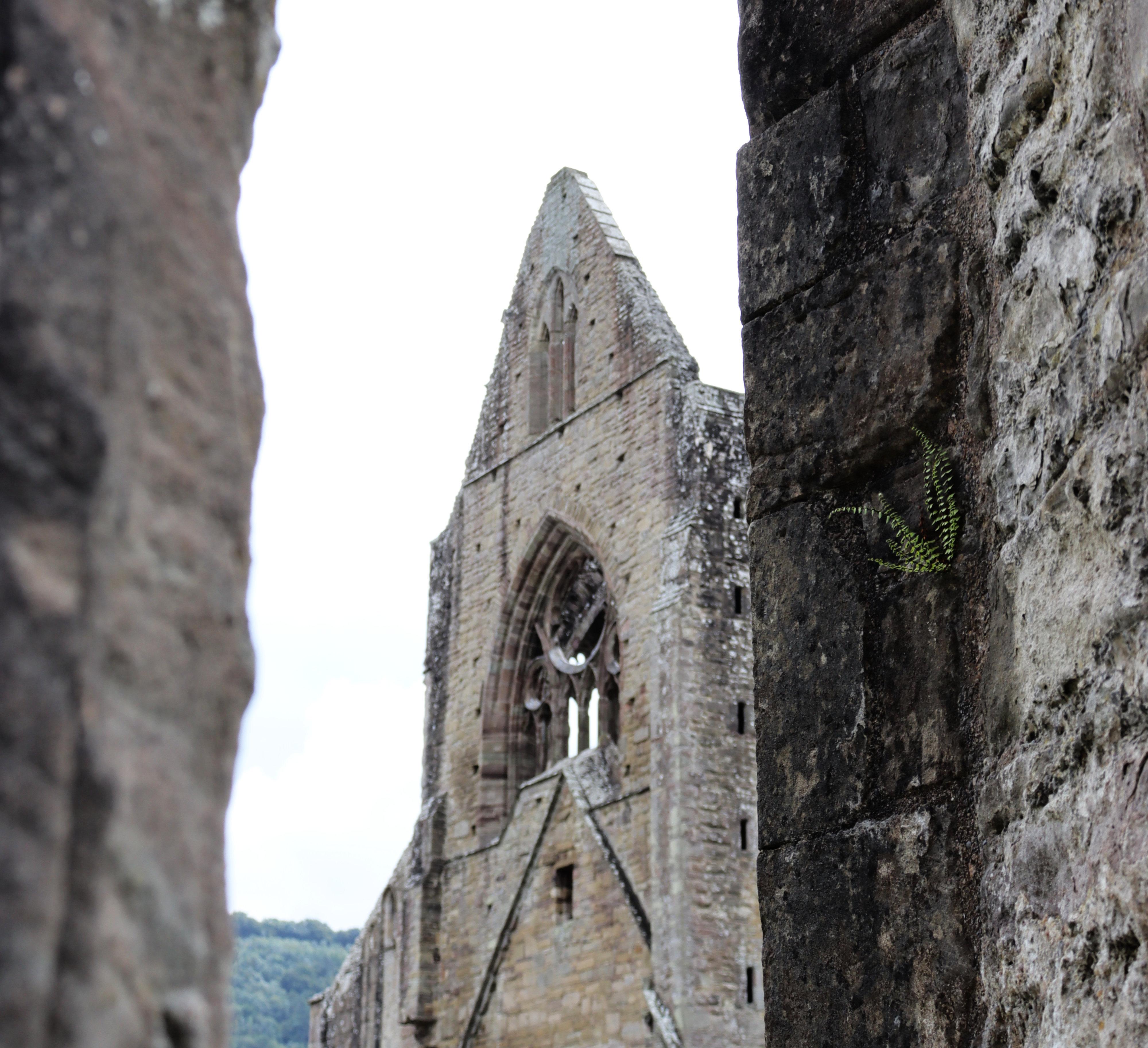 View of Tintern Abbey through a gap between walls.