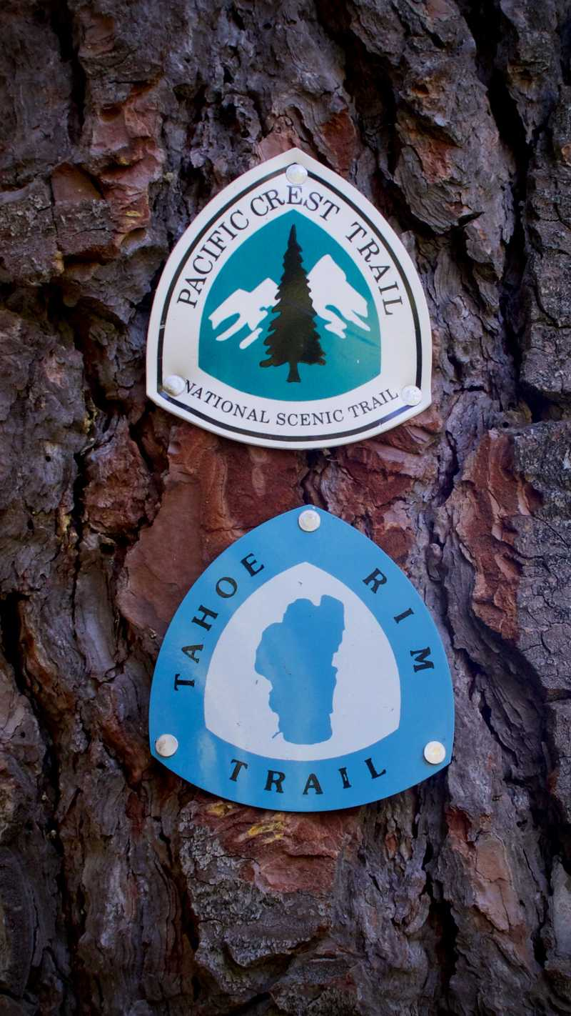 PCT and TRT emblems mounted on a tree