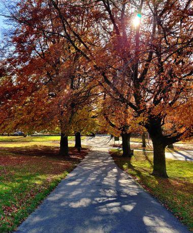 Potternewton Park sunlight through tree on path