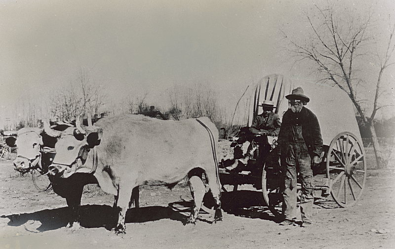 Ox team and wagon