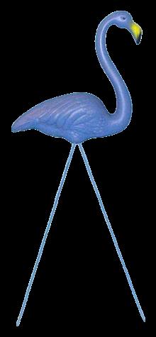 Blue Flamingo photo