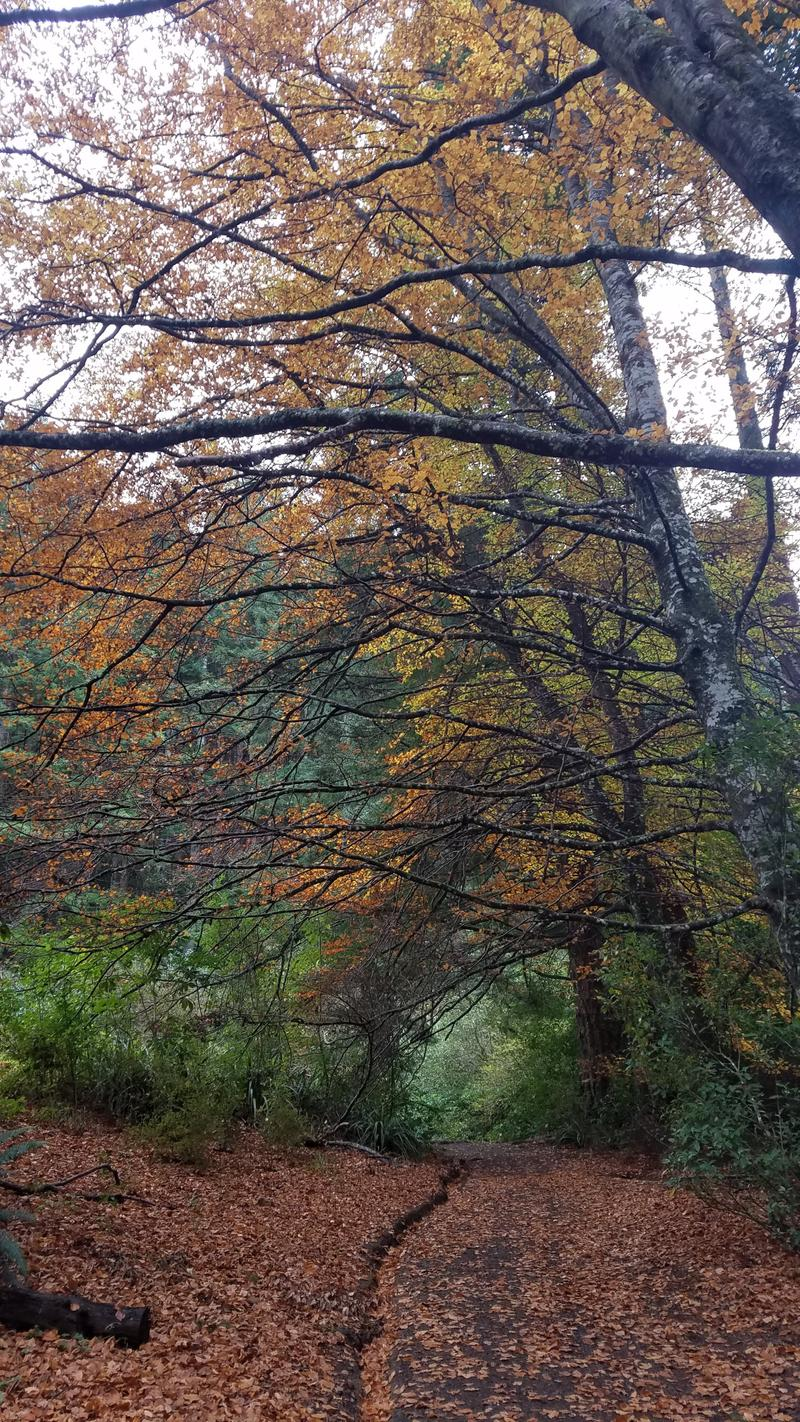 Fall in Bethune's Gully