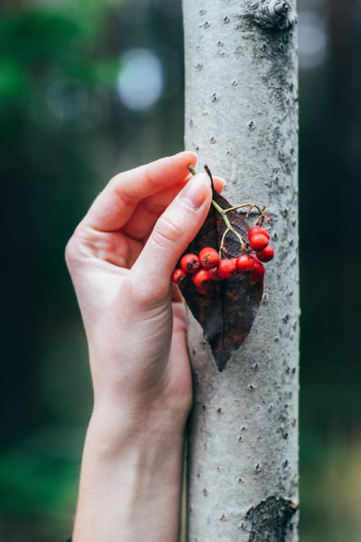 Female hand holding red berries