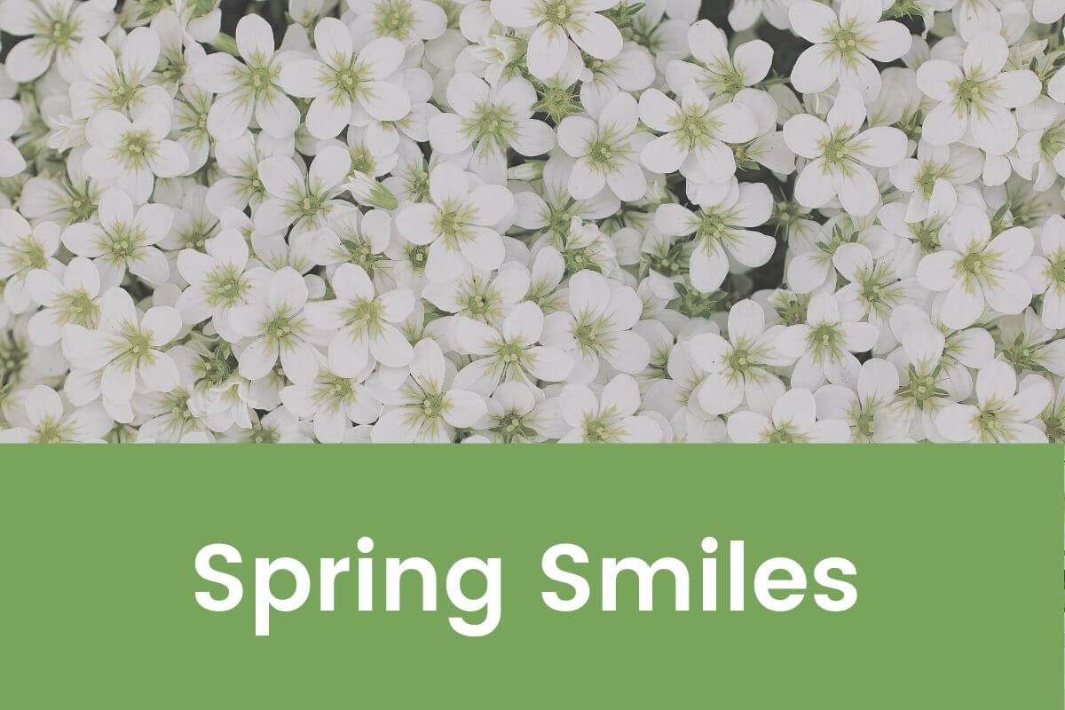 5 Ideas To Bring Spring Smiles- Featured Shot