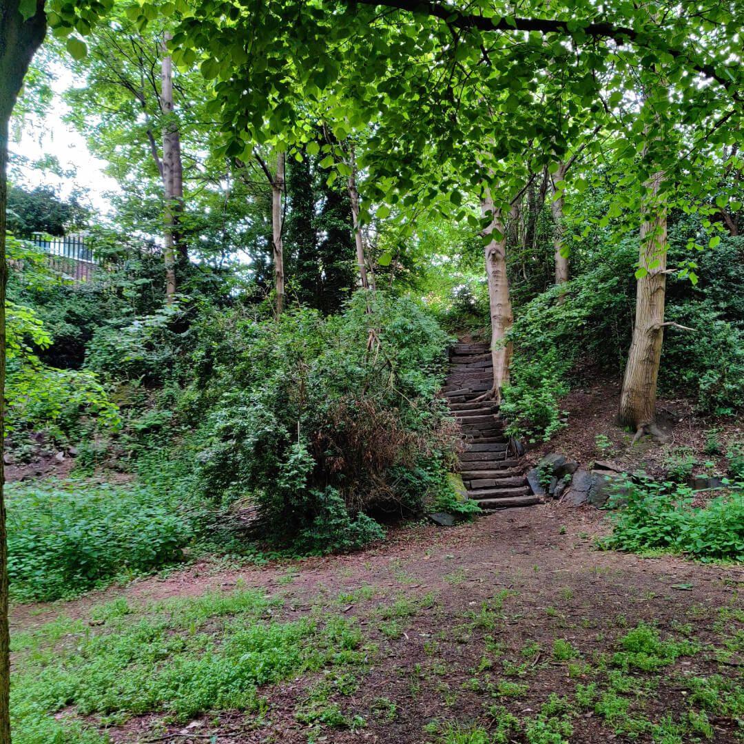 Woodhouse Ridge woods