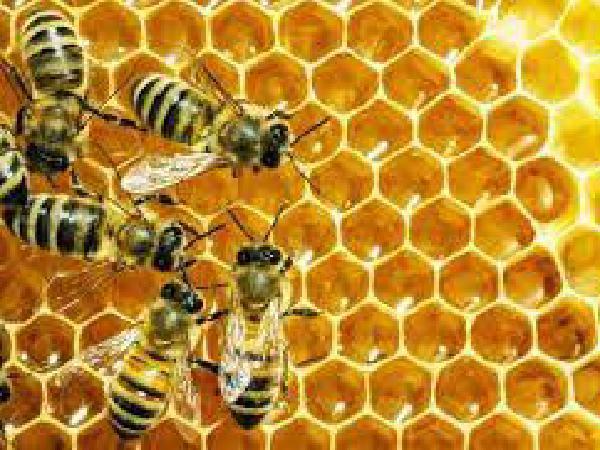 버지니아 폴리네이터 위크, '줄어드는 꿀벌 지키자'