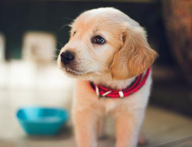 New Puppy Checklist: Battle-tested Items You Need For The Early Stages