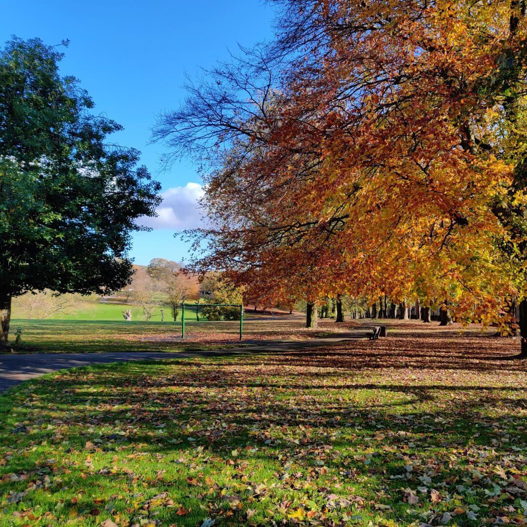 Potternewton Park in Autumn