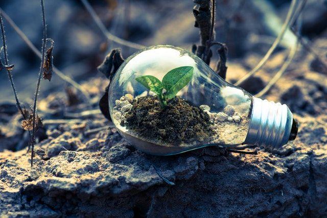 plant growing inside a lightbulb