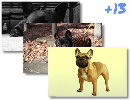 French Bulldog theme pack