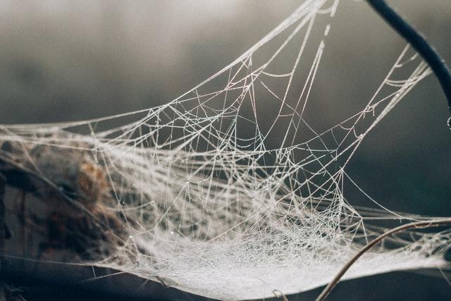 Spider web, by Anthony Ievlev on Unsplash