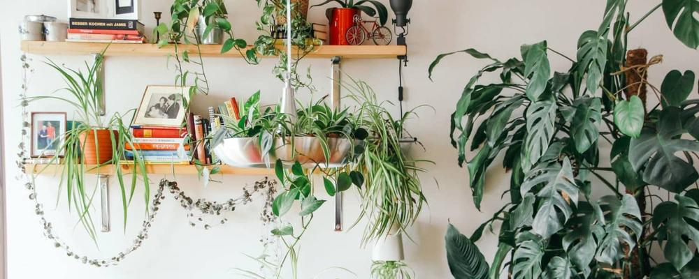 mini plants2