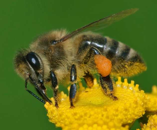 Insect pollinating flower